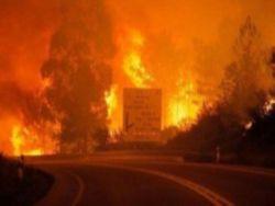 В Португалии в результате лесного пожара погибли 62 человека
