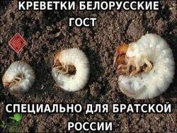 Беларусь наращивает поставки рыбы и морепродуктов в Россию
