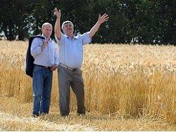 Тайна зернового экспорта: Россия променяла говядину на курятину