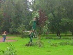 В Питере коммунальщики приклеили скотчем свежие ветки к засохшим деревьям