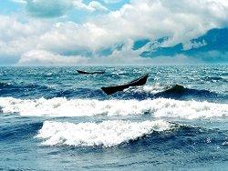 Минприроды хочет сократить в 10 раз площадь водоохранной зоны Байкала