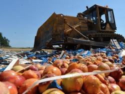Уничтоженной властями «санкционки» хватило бы на 42 тысячи семей
