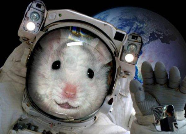 20 мышей проведут три месяца в космосе