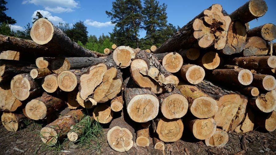 В России в этом году будет вырублен рекордный за несколько лет объем леса : Экономика и бизнес Newsland – комментарии, дискуссии и обсуждения новости.