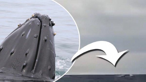 В водах Стокгольмского архипелага заметили кита : Происшествия Newsland – комментарии, дискуссии и обсуждения новости.