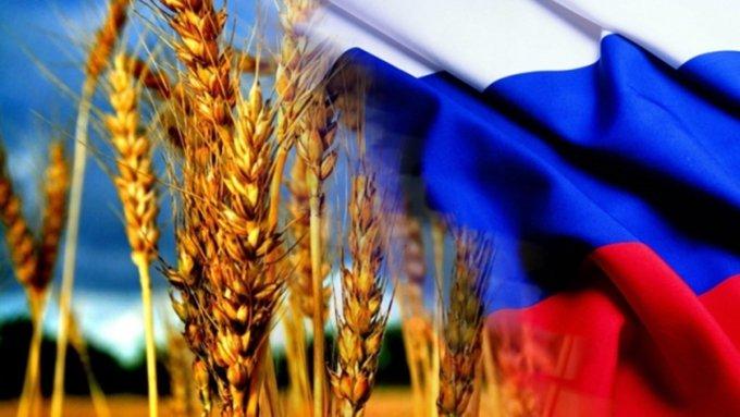 Урожай пшеницы России угрожает США