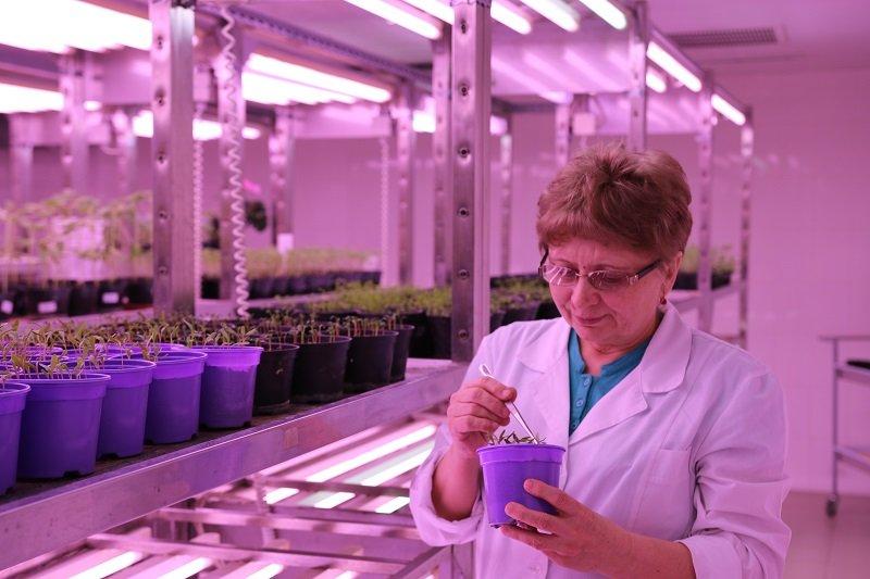 Аграрии строят мост в космос: будущее начинается с земли