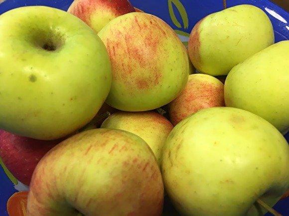 Россия ввела запрет на поставки яблок и груш из Белоруссии