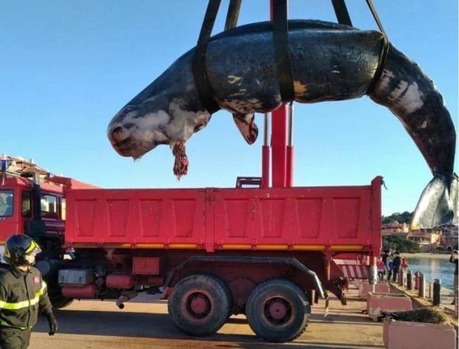 Мусор убивает: Мертвый кашалот на берегах Сардинии