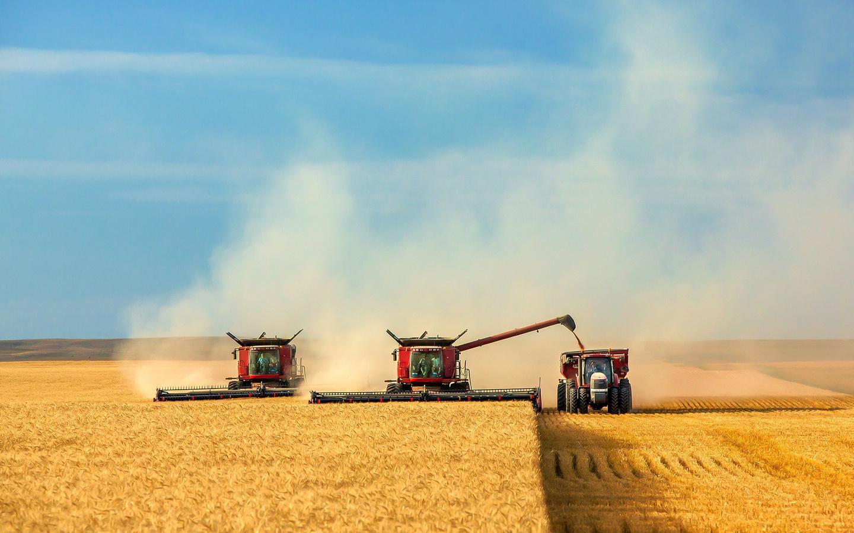 Эксперты снижают прогнозы урожая в России