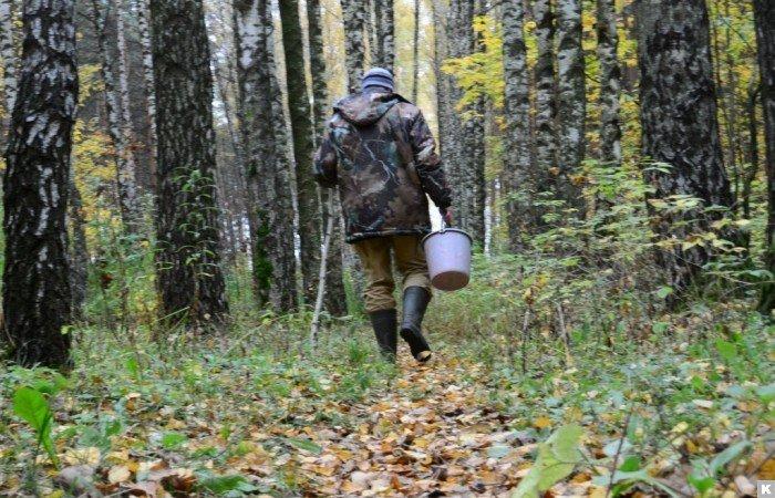 Опасности, поджидающие в лесу любителей грибов и ягод