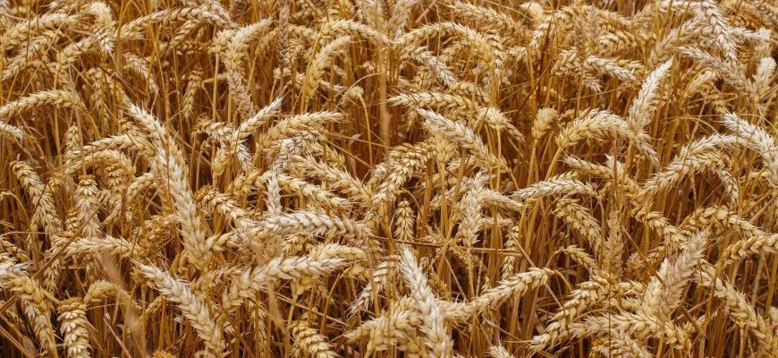 Немецкие фермеры за устойчивое сельское хозяйство