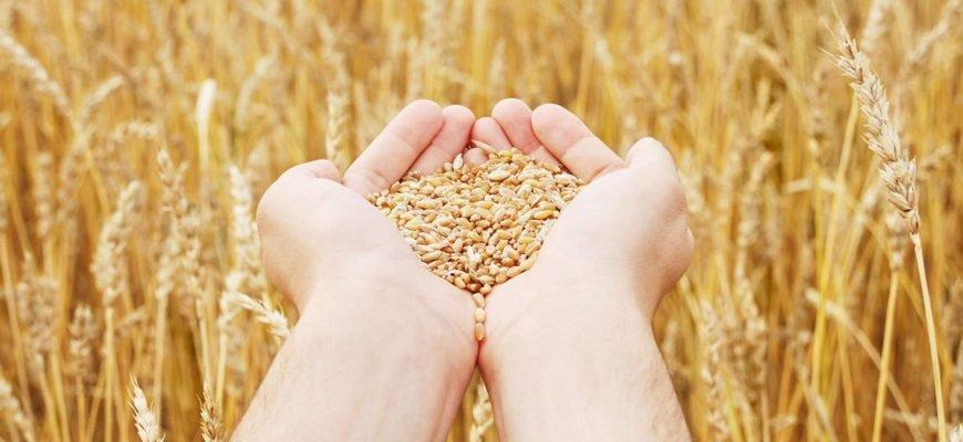 Бразилия введет новую квоту на импорт пшеницы