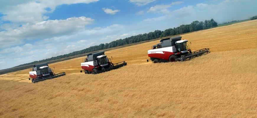 В России убрано более 70% площади посевов пшеницы