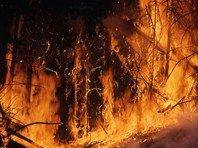 Рослесхоз заявил, что поджоги не могут быть причиной катастрофических пожаров в Сибири
