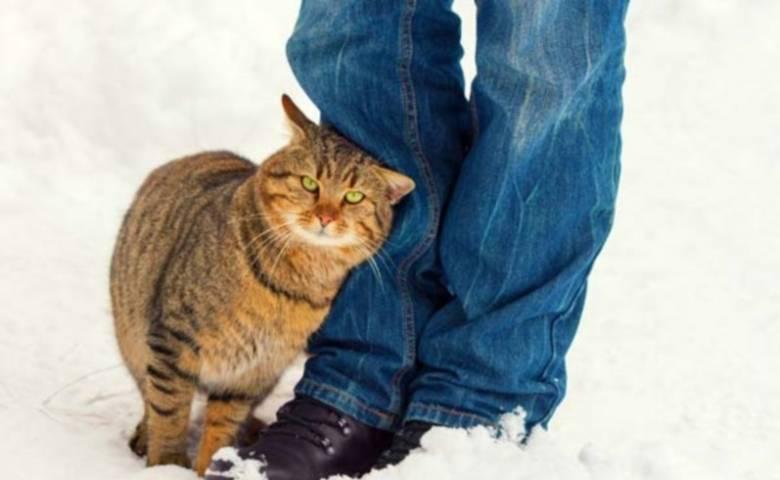 Почему кошка трется о ноги людей, хозяина, что значит, если она трется мордой о лицо