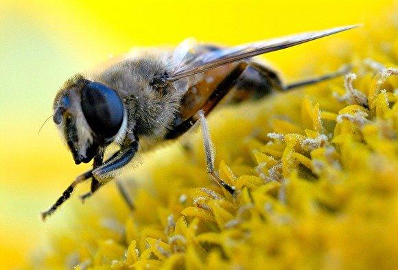 Под Тамбовом офицер и командование войсковой части судились из-за пчелы