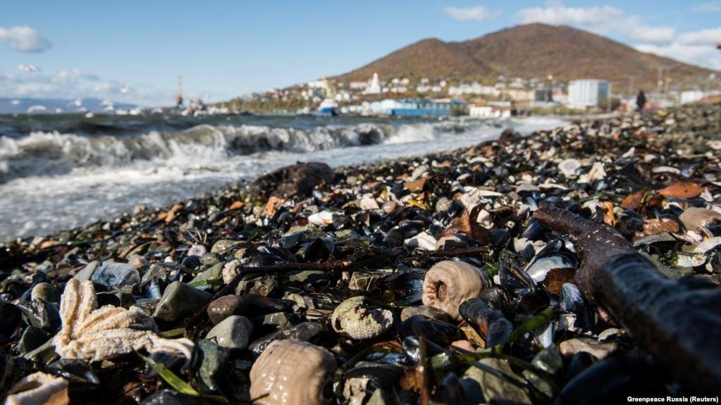 Химики нашли следы ракетного топлива рядом с местом отравления морских животных на Камча
