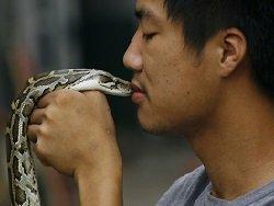 Российские биологи нашли способ подавить коронавирус змеиным ядом