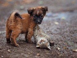В Госдуме предложили усыплять бездомных собак