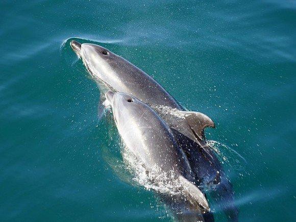 Эксперты СЭП подтвердили массовую гибель дельфинов и морских птиц на Черном море