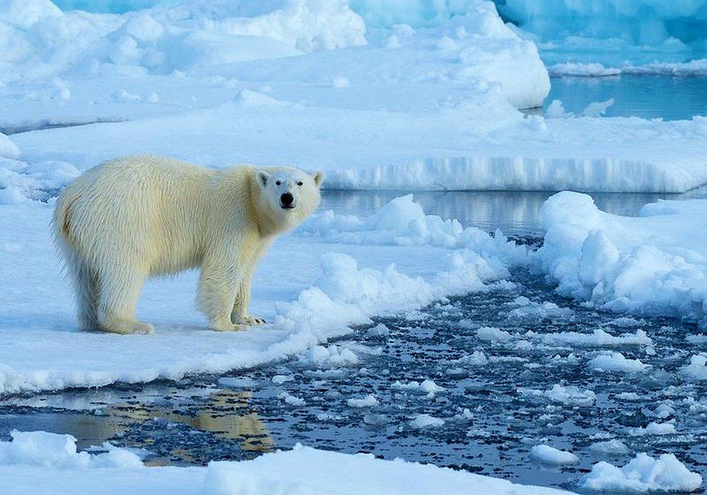 Госдума одобрила распространение «Дальневосточного гектара» на Арктику