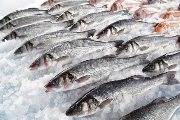 Экспорт рыбопродукции из России в Китай упал в пять раз