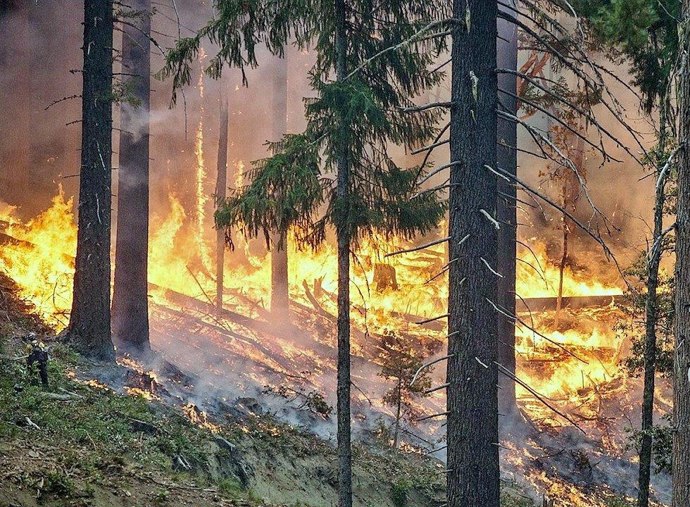 Пребывание в лесах Подмосковья ограничили до 19 июля из-за риска пожаров