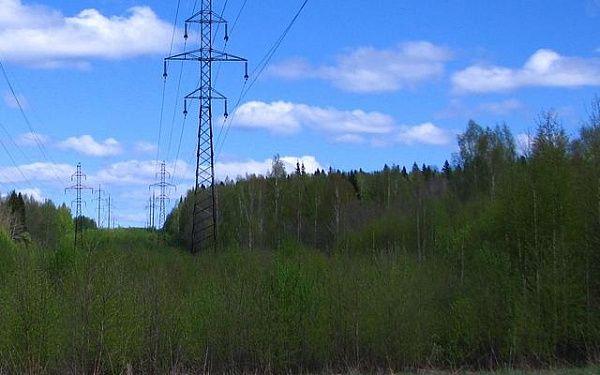 Пропавшего в лесу в Свердловской области тюменского срочника нашли мертвым